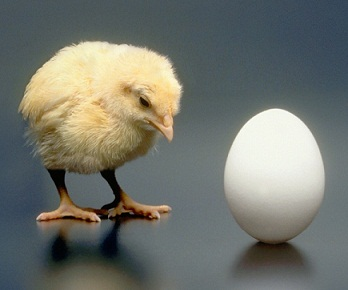 Chicken-or-the-Egg-smaller
