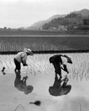 Land Policy after Land Reform in Japan