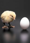 Chicken or the Egg: Culture Change or System Change?